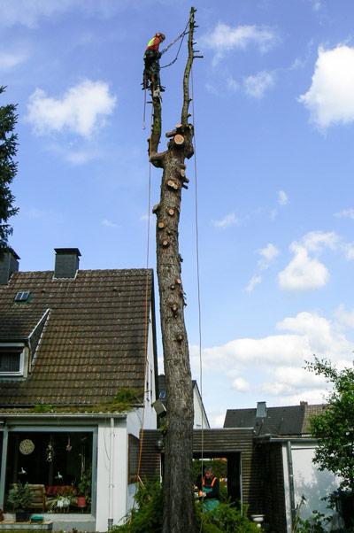 baumpflege-begutachtungen-bb-henry-faellungen-2015-4