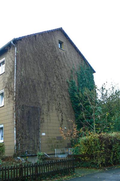 baumpflege-begutachtungen-bb-henry-fassadenbegruenung-2-vor