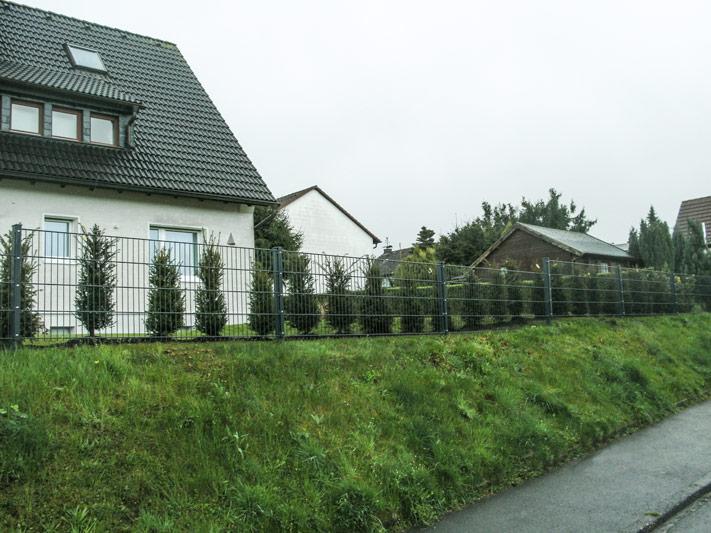 baumpflege-begutachtungen-bb-henry-pflanzungen