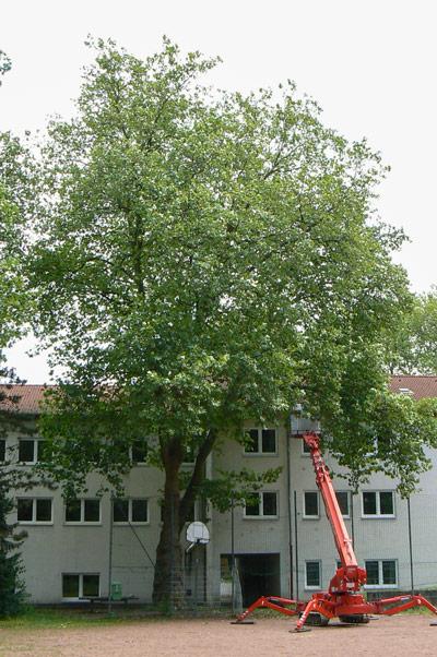 baumpflege-begutachtungen-bb-henry-kronenpflege-3